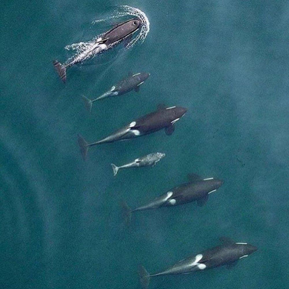 whales drone.jpg