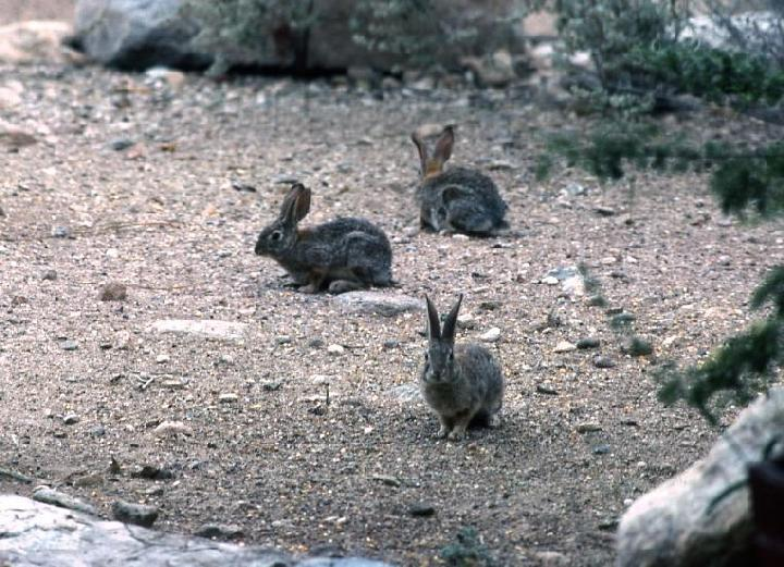 Rabbits5.jpg