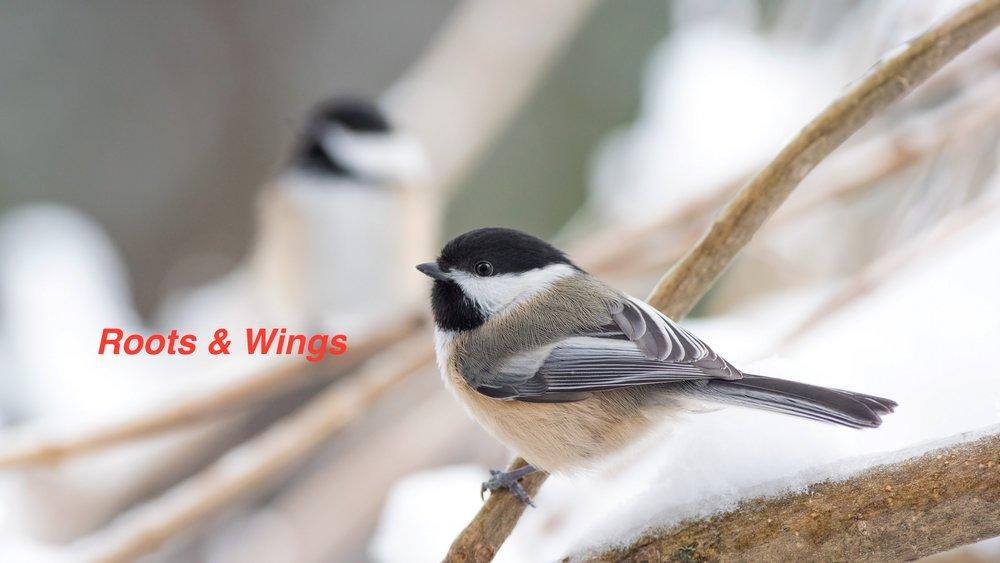 Roots & Wings.jpg