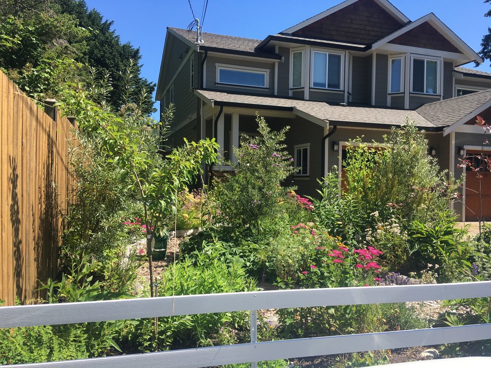 What used to be lawn is now a small ecosystem brimming with life, food and medicine.
