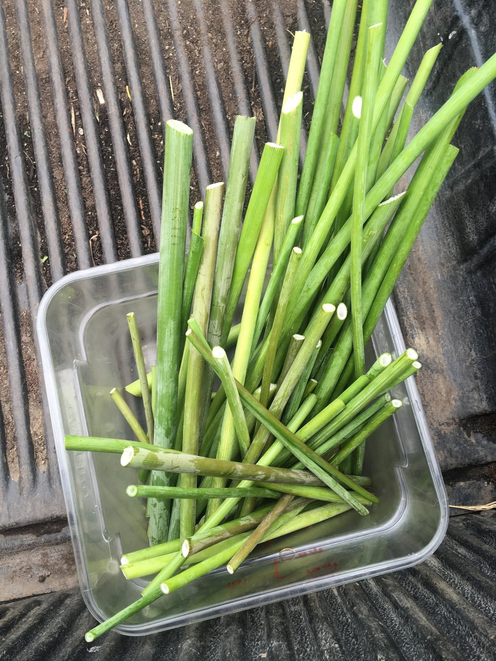 Future lovage straws