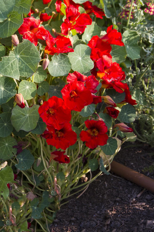Plant Buoy4.jpg