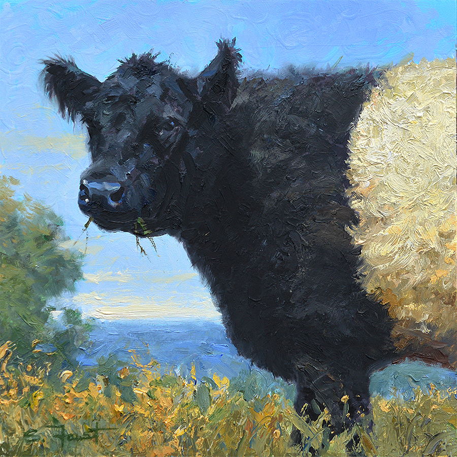 "Grazing Belty  12""x12"" oil"