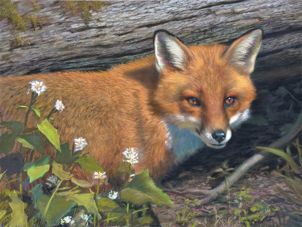 "Spring Fox  24""x18"" pastel"
