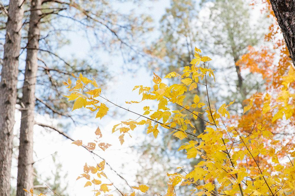 sedona-fall-colors-1.jpg