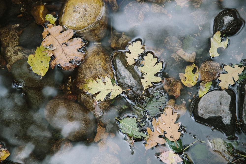 Sedona-Foliage.jpg