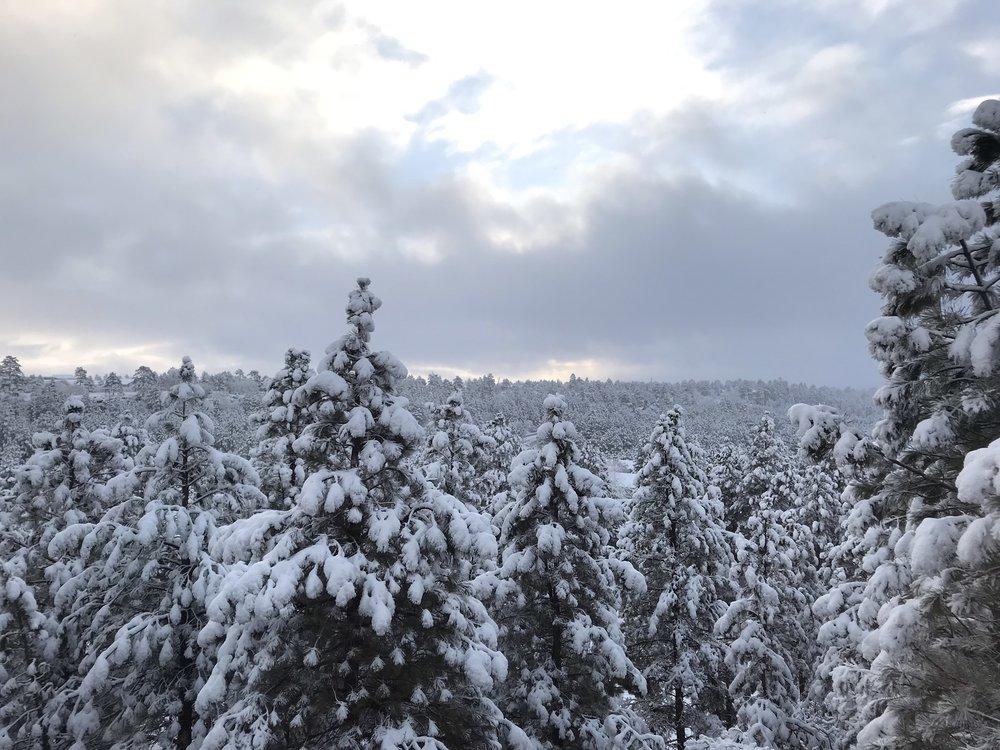 Snow in Flagstaff