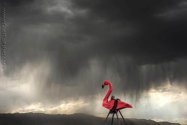 Phoenicopterus-Rex-by-Josh-Zubkoff.jpg
