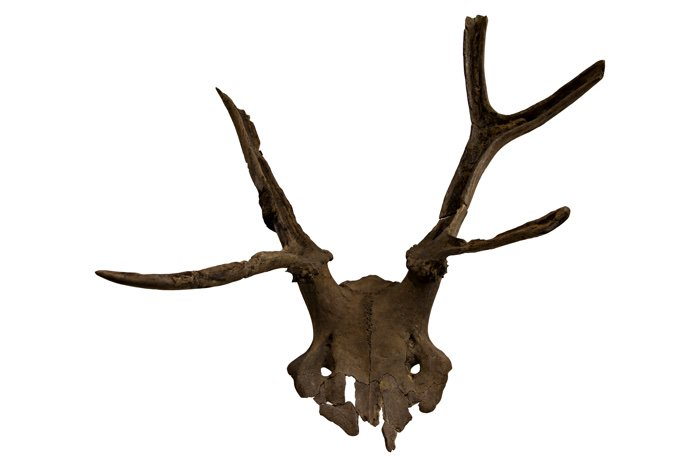 We'll be briefly exploring the ancient UK site o Star Carr where several ancient deer headdresses were found