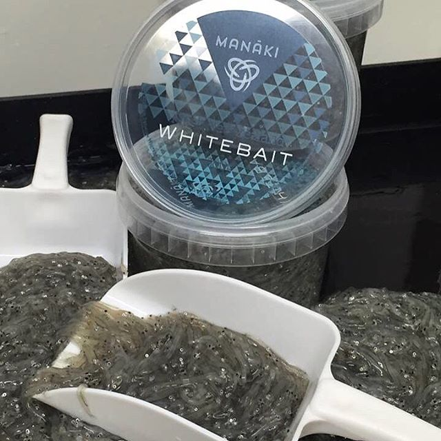 Head to the @matakanafarmersmarket tomorrow morning to listen to @manaki_whitebait talk about sustainable farmed whitebait 🐟 Starting at 10am!