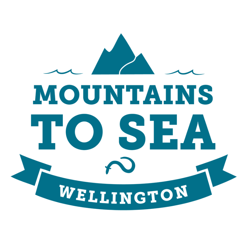 About - Mountains to Sea Wellington delivers inspiring freshwater and marine education programmes for schools and communities across the greater Wellington region. We connect people to nature, building understanding through science and exploration, and fostering kaitiakitanga (guardianship) for the environment.