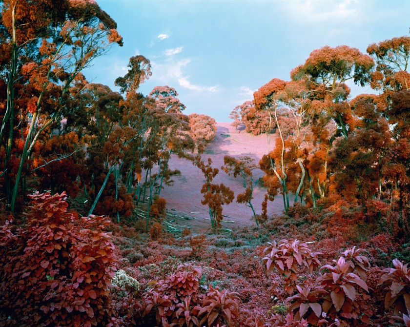 doorofperception.com-richard_mosse-24-840x670.jpeg