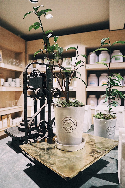 Daylesford Plants.jpg