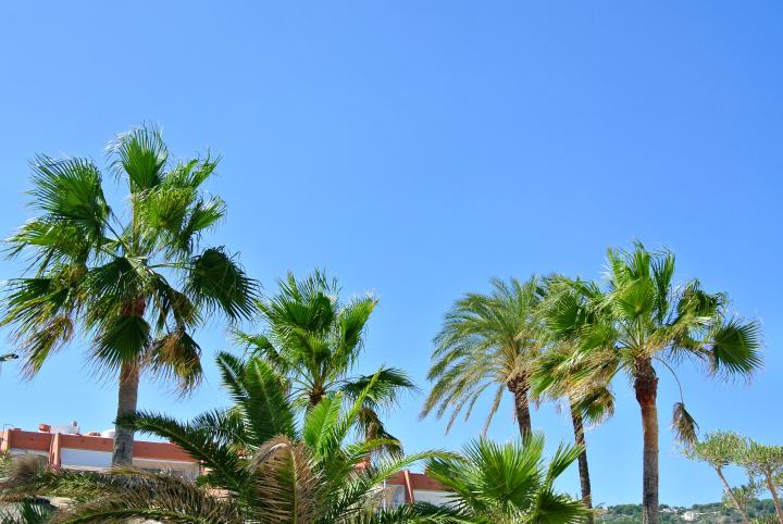 La Siesta Palm Trees.jpg