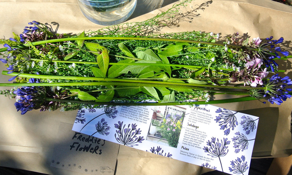Freddie's Flowers Agapanthus Flat Lay.jpg