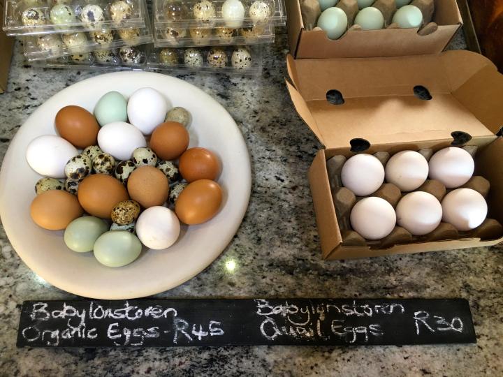 Organic Eggs at Babylonstoren.jpg