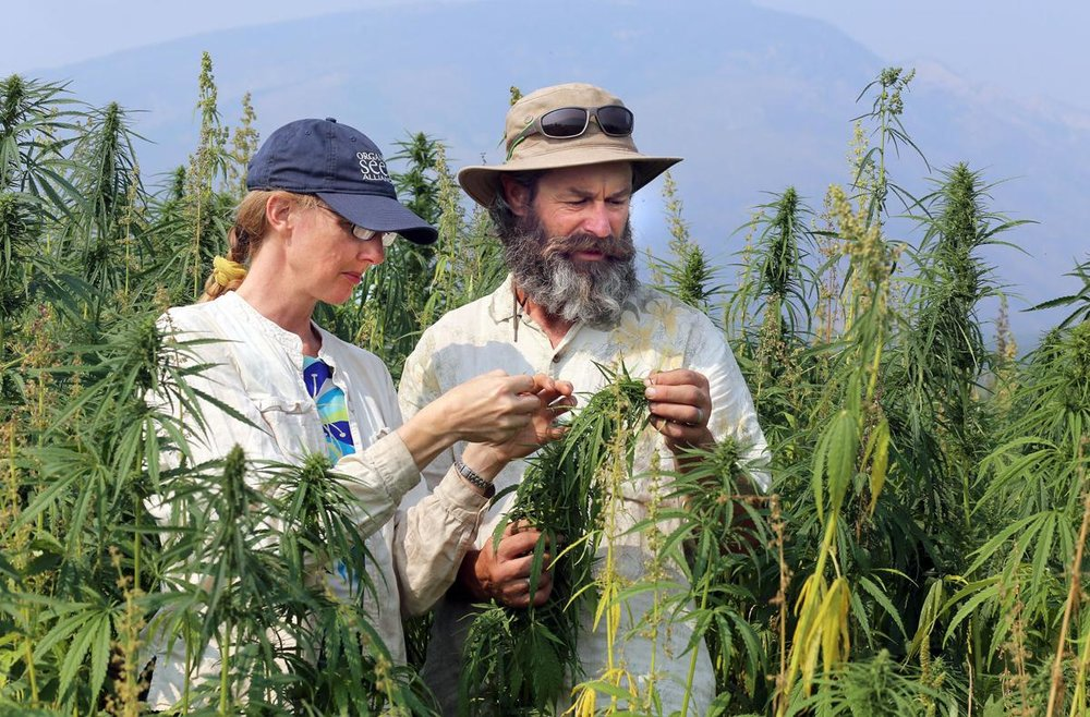 Hemp fields forever: Local couple pioneer new crop of industrial hemp - August 10, 2018Ravalli Republic: by Perry Backus