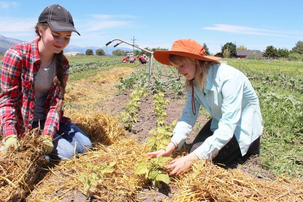 Helping hands:  Bitterroot Valley youth join in partnerships at Homestead Organic Farms - July 10, 2016Missoulian:  by Michelle McConnah