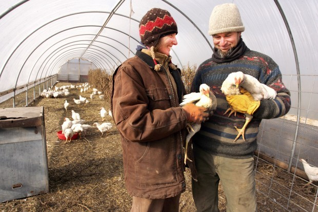 Hamilton organic farm raising chickens, funds for food bank - November 23, 2010Ravalli Republic:  by Perry Backus