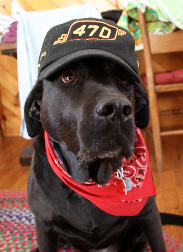 Steam Dog 470 Hat 006.jpg