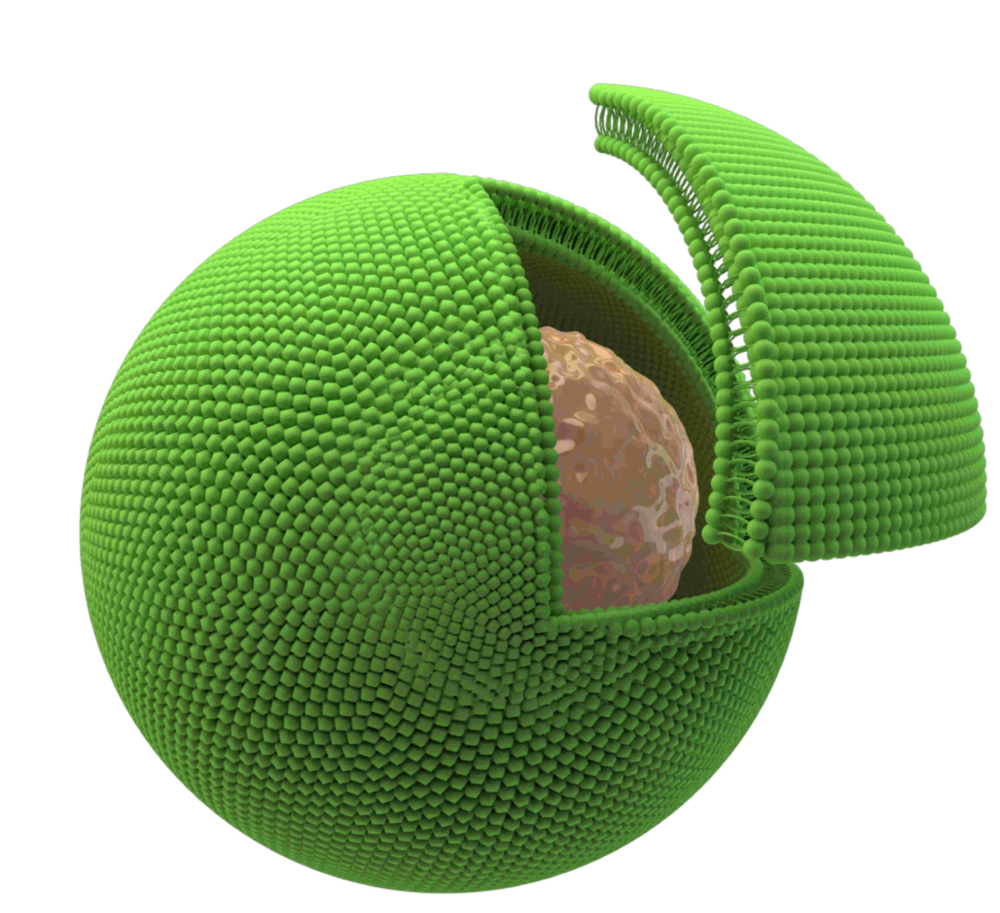 Cell in vesicle.png