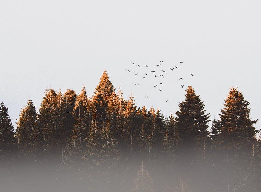 birds-cold-conifer-917494.jpg