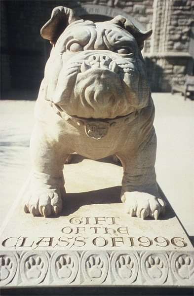 Butler University Bulldog