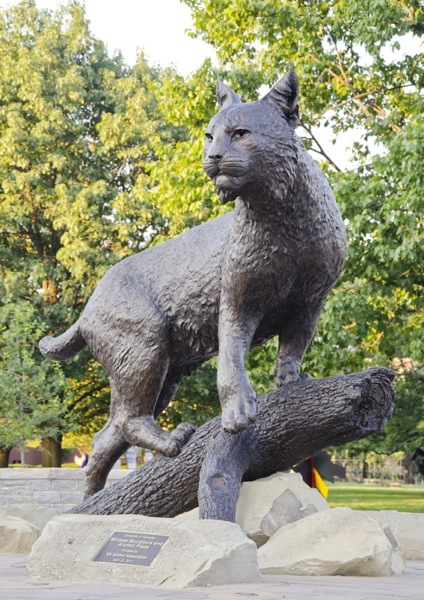 University of Kentucky Wildcat