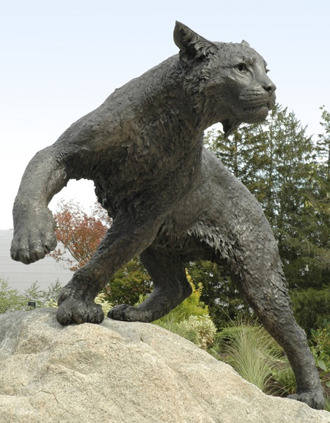 University of New Hampshire Wildcat
