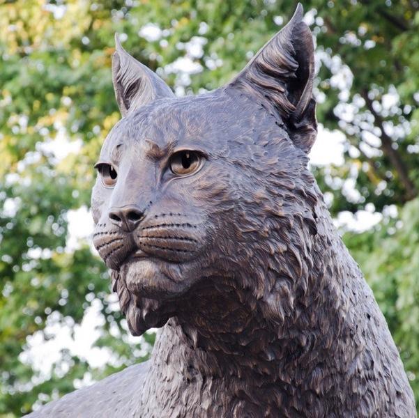 University of Kentucky Wildcat -