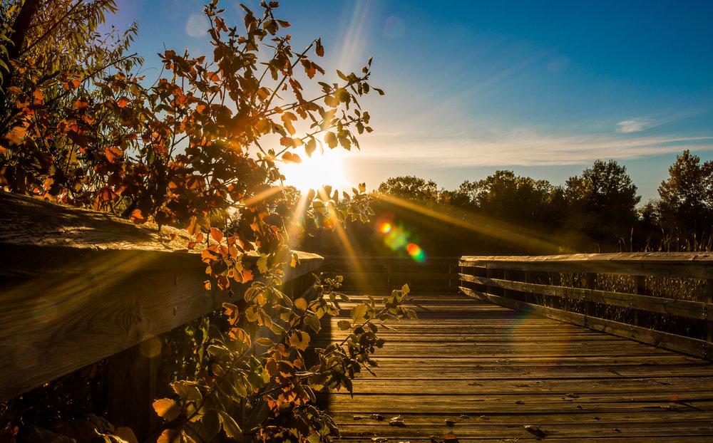 Mahoney Sun Rays
