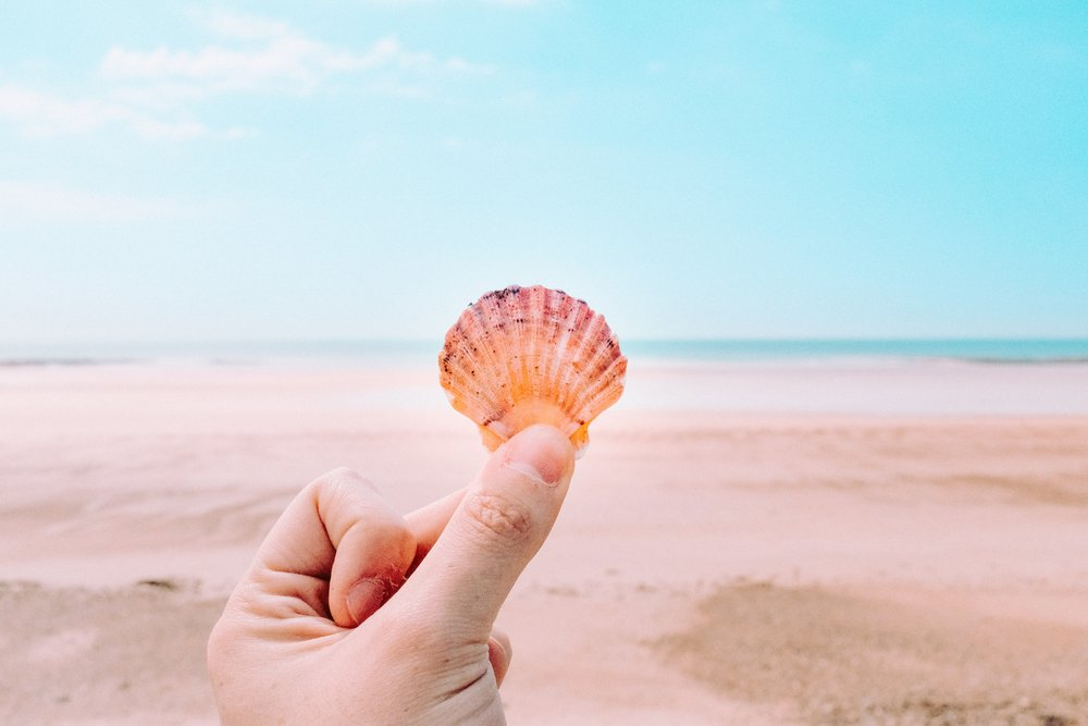 shell on pink beach