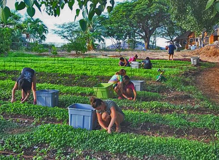 Permaculture-communities