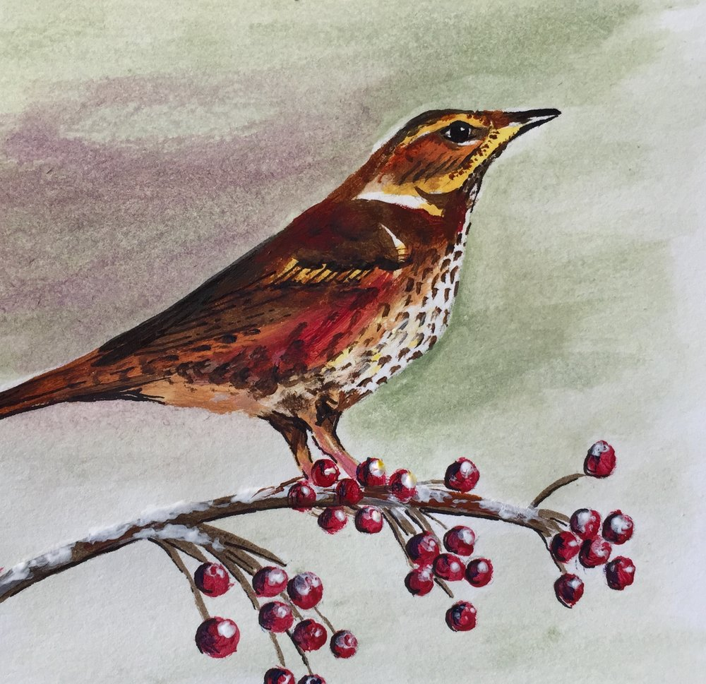 Redwings will arrive from September onwards, recognisable for their rust-coloured underwing and speckled chest. Painted in acrylic.