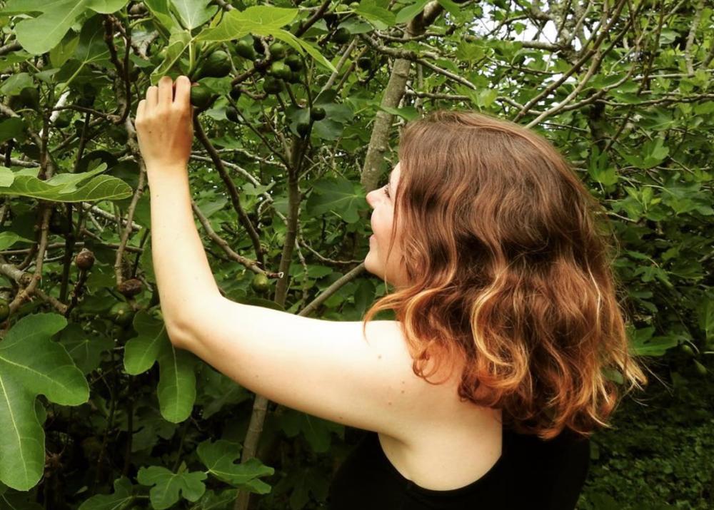 Admiring the figs in Agatha Christie's garden, Devon