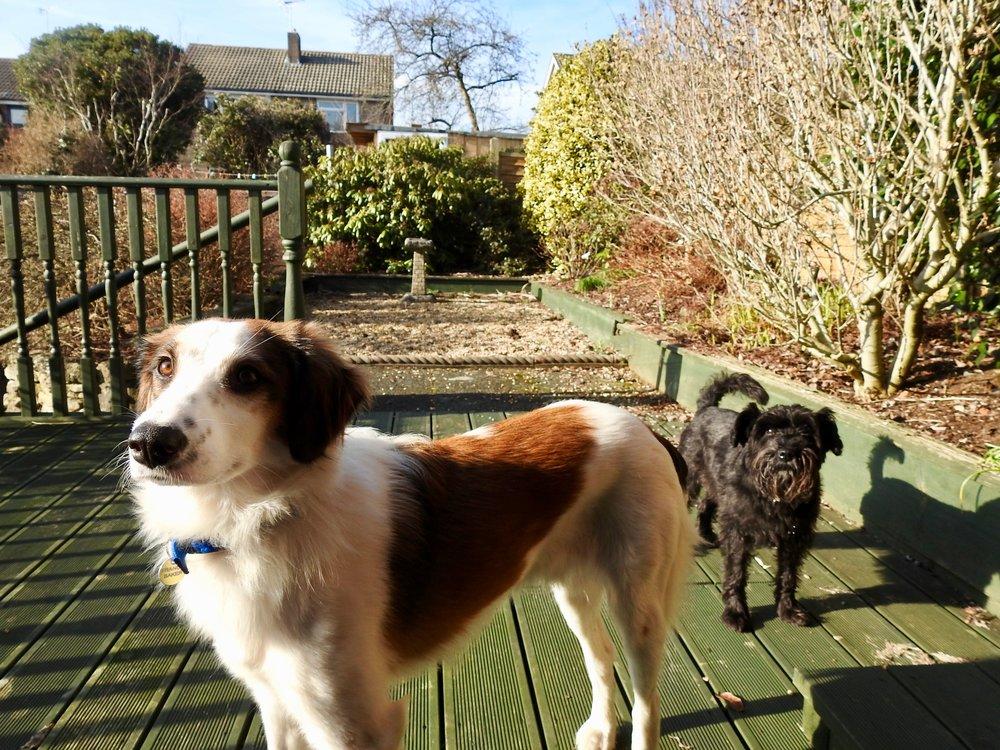 Pablo and Tinks enjoying the sunshine