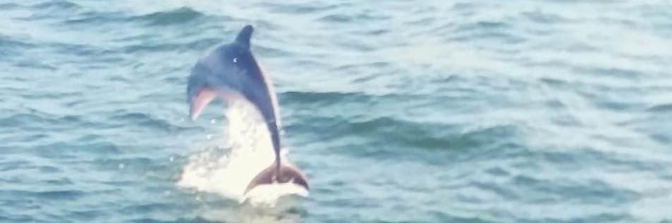 Dolphin Watching Cruises.jpg