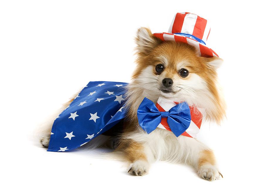 patriotic_pomeranian.jpg