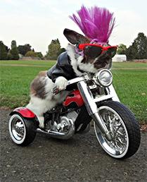 bike_bunny.jpg