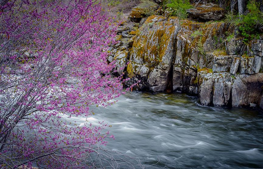 Redbud Merced River