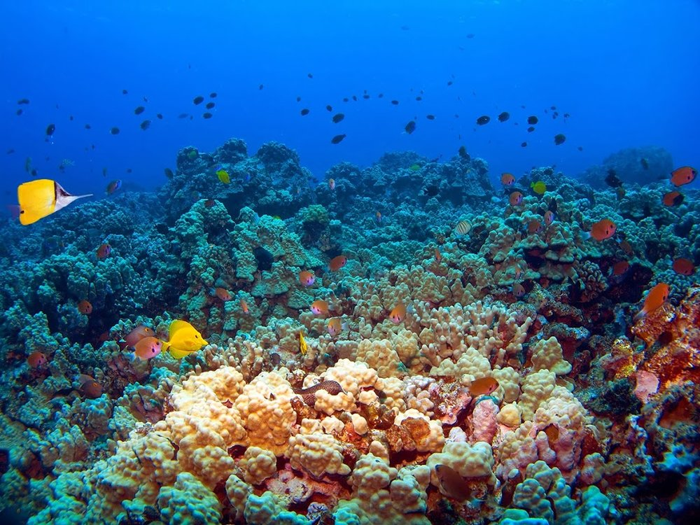 Molokini_Reef_BKG[1].jpg