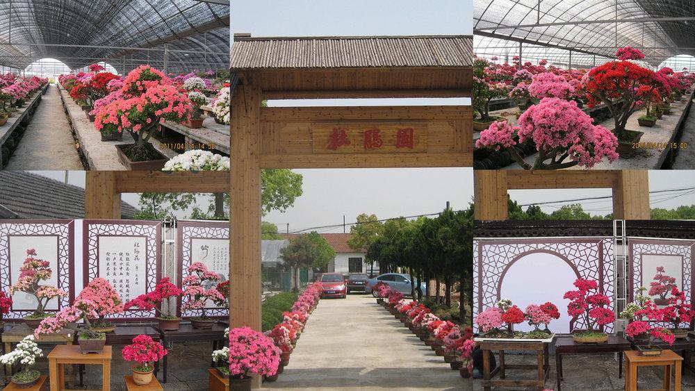 china bonsai company.jpg