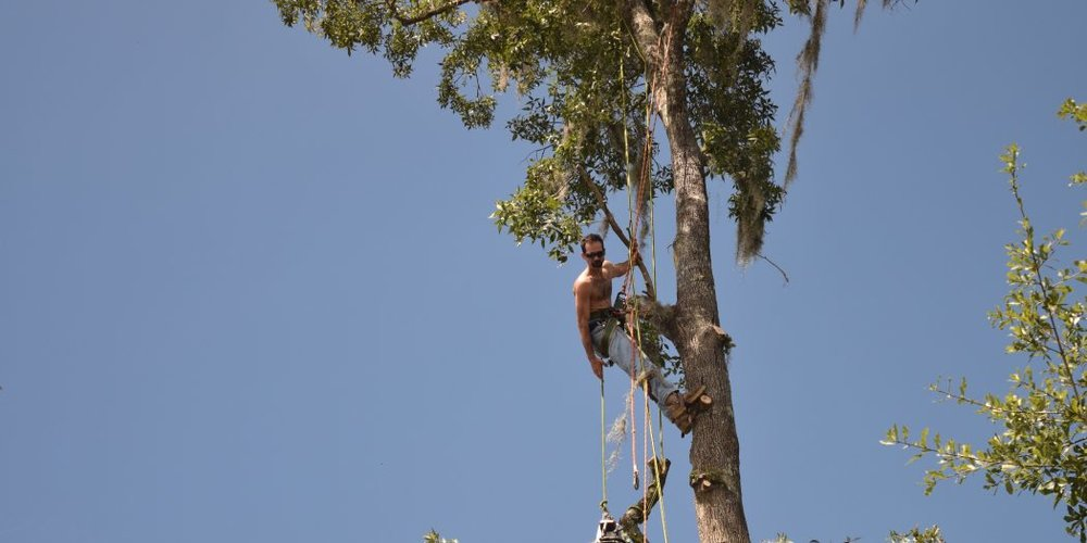 Tree Trimmer Climbs Ahead of Irma - WUFT News