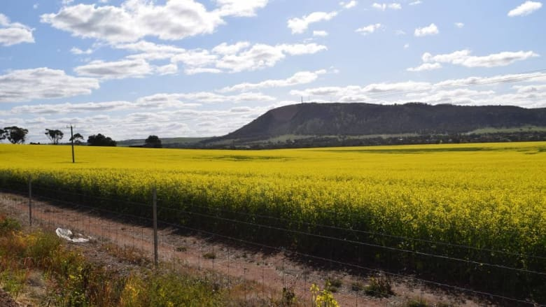 """Canola Catch-22: Tourists trample on fields""  WA Today - September 09, 2017"