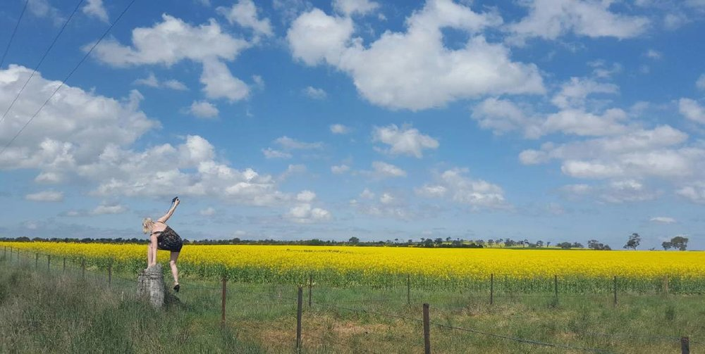 """Cowra's fields of gold""  Cowra Guardian - August 06, 2016"