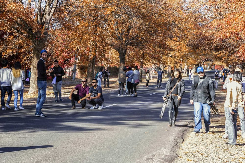 The mass tourism effect, visitors pose all throughout the avenue on a Friday morning.