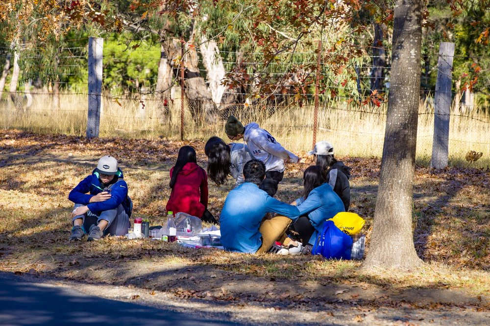 Anyone for a picnic?  Visitors set up a picnic on the roads edge, whilst others take images amongst the leaves.