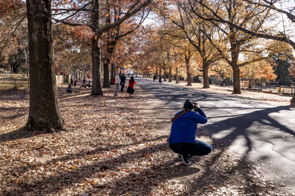 A photographer gets low to capture the action. Visitors line the avenue all waiting to get there shots.