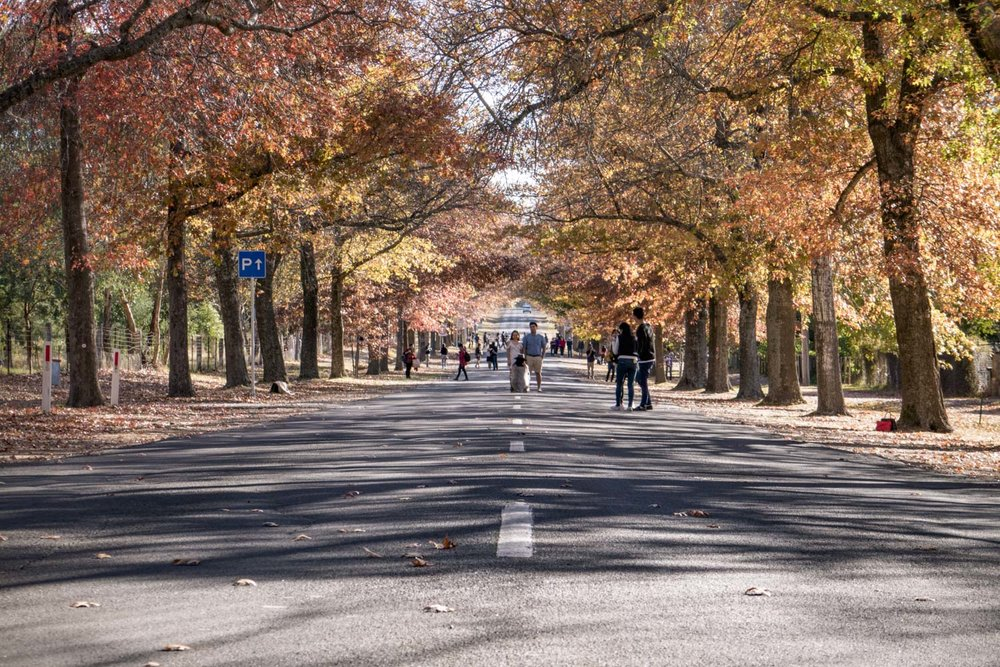 That trophy image view. The view along the avenue of honour.