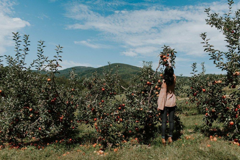 manzanas plantación